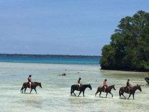 Horseriding vanuatu