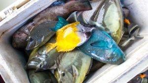 reef fish vanuatu