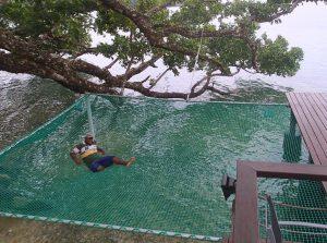 vanuatu giant hammock