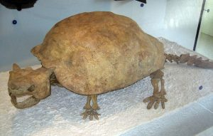 Vanuatu giant turtles