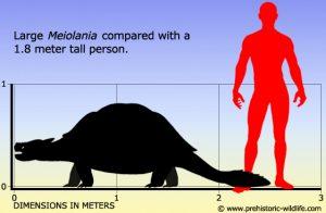 meiolania-size